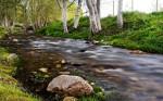 Creek Jamie Lusch