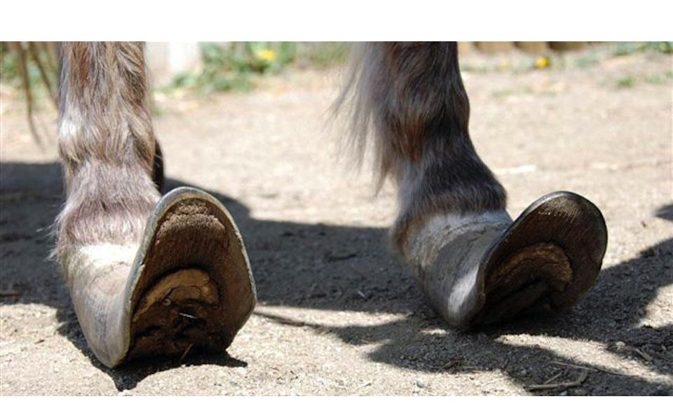 Dapples Feet