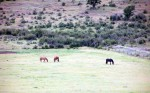 Upper Field 2