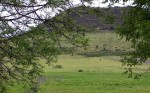Upper Field 4