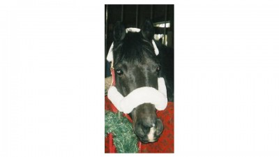 Equamore Horse Chaps in the Holiday Spirit!