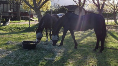 Eddie&Wishes Grazing2