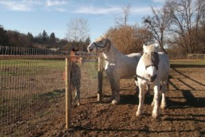Flint and Diamond dwarf a regularly sized horse.